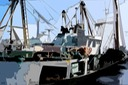 TRAWLERS IN DOCK