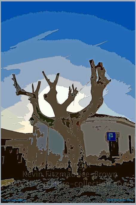 STARK TREE AND HOUSE ALGARVE PORTUGAL